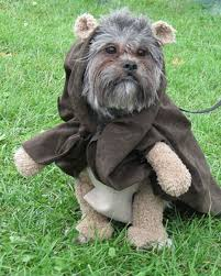 Martha Stewart Dog Halloween Costumes Favorite Pet Photos Martha Stewart