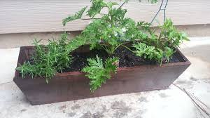 plants that keep mosquitoes away mosquito repelling plants wupps i u0027m domesticated