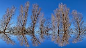 free photo reflection background tree optical illusion mirror
