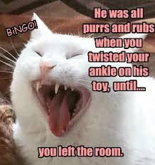 Bad Kitty Meme - tuesday tickles bad kitty version hairballexpress