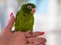 chatty parrot helps catch home burglary suspect police rohnert