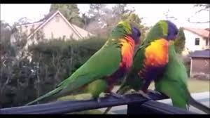Funny Bird Memes - funny amazing birds memes compilation funny vines best of animal