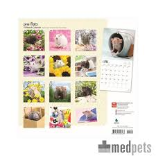 Kalendar 2018 Nederland Rats Kalender 2018 Nagetier Bestellen