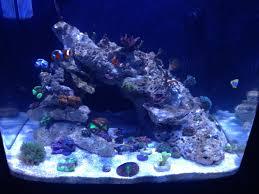 Floating Aquascape Reef2reef Saltwater And Reef Aquarium Forum - rimless 29 bio cube project reef2reef saltwater and reef