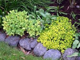 Bush Rock Garden Edging How To Create A Garden Edging