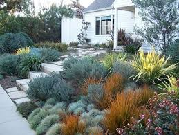 best 25 california drought ideas on pinterest drought tolerant