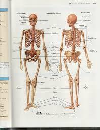 Sewing Machine Parts Diagram Worksheet Anatomy Online Test Gallery Learn Human Anatomy Image