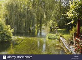 uk berkshire boxford willow trees on the river stock photo