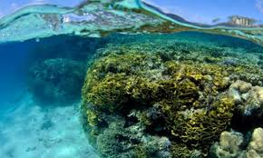 thanksgiving reefs climate signals climate changes affecting maldives coral reefs