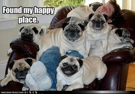 Happy Place Meme - pug dogs happy place dump a day