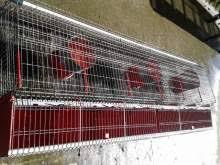 gabbie per conigli nani usate gabbie per conigli annunci sicilia kijiji annunci di ebay