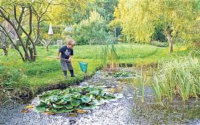 frogs threat from goldfish in garden ponds telegraph