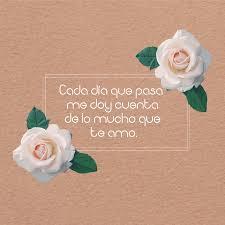 bonitas de rosas rojas con frases de amor imagenes de amor facebook 7 imágenes de rosas blancas hermosas con frases de amor