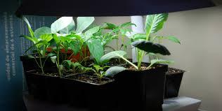 indoor herb gardens kits home outdoor decoration
