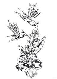 drawings of flowers sketches haammss