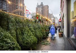 christmas trees on sale christmas trees sale in new stock photos christmas trees sale in