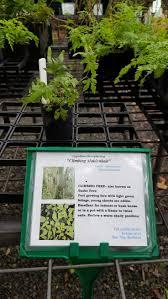 32 best plant labels images on pinterest plant labels plants