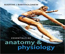 Human Anatomy And Physiology Marieb 5th Edition Test Bank Sample For Essentials Of Anatomy And Physiology 5th