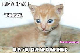 Cute Kitten Memes - i m giving you the face funny cat memes