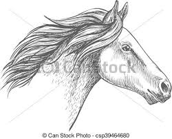 vector of white horse pencil sketch portrait running mustang with