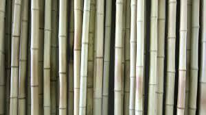 buy bamboo trendy door curtain 9ft pack of 2 online in india