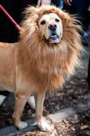 best halloween masks for sale best 25 halloween costumes for dogs ideas only on pinterest pet