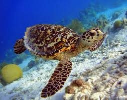 travel for teens hawaii sea turtle service and adventure 11