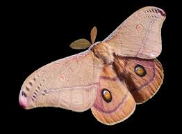 Moths In Kitchen Cabinets Moths Planning Poor