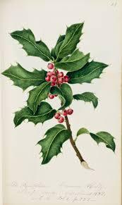 o christmas tree o christmas tree national museum wales
