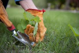 Ready For Spring by Expert Advice How To Get Your Garden Ready For Spring Thumbtack
