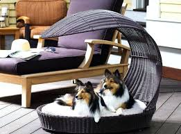 dog couches lounges australia cots for large dogs u2013 tfreeamarillo com