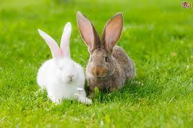 can rabbits be kept together pets4homes