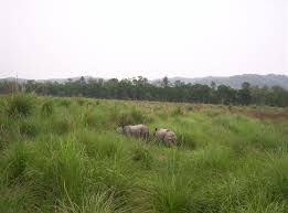 Tropical Savanna Dominant Plants - terai duar savanna and grasslands wikipedia