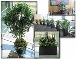 live indoor plants who should have live plants
