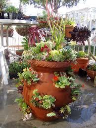 amazing succulent pot ideas 129 succulent garden pot ideas
