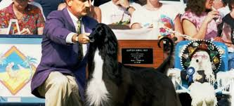 afghan hound therapy dog best in show daily