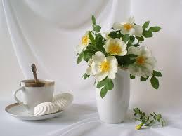flower flower tea flowers photography drink white rose gently