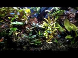 membuat aquascape bening belajar aquascape upload 19 maret 2018 youtube