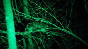 night hunting lights for scopes how to choose coon hunting lights enjoy hunting life