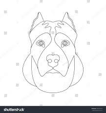 american staffordshire terrier head face vector stock vector