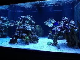 Live Rock Aquascaping Ideas Minimalist Aquascaping Archive Page 4 Reef Central Online