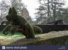 Yew Topiary - image result for yew topiary yew topiary pinterest