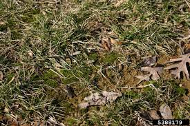 general lawn care articles gardening know how