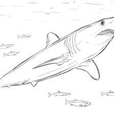 mako shark coloring kids drawing coloring pages marisa