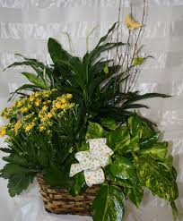 blooming plants green plant and blooming plant gardens are great keepsakes for