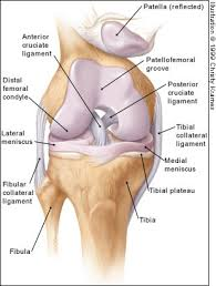 Lateral Patellar Ligament Acute Knee Effusions A Systematic Approach To Diagnosis