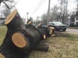 with more storms and older trees utilities get aggressive on