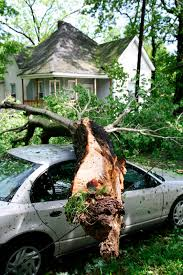 does homeowners insurance cover dead trees on my property