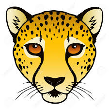 cheetah head images u0026 stock pictures royalty free cheetah head