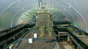 garden aquaponics in the uk growing fruit fish and veges in our